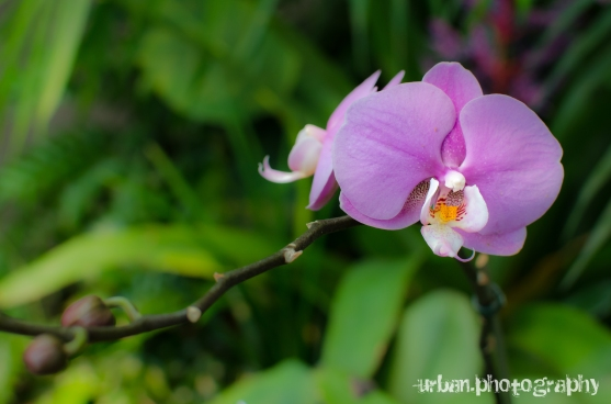 35mm orchid